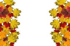 Листья красного цвета и желтого цвета Стоковое фото RF