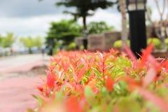 Листья красного цвета и зеленого цвета на взгляде Стоковое Изображение