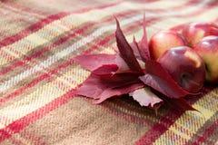 Листья красного цвета и красные яблоки на коричневом крупном плане шотландки Стоковое Изображение RF