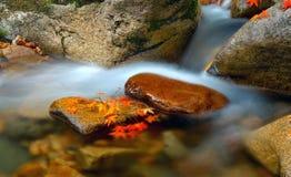 Листья красного цвета ручейка стоковое фото rf