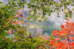 Листья красного цвета Стоковое Фото