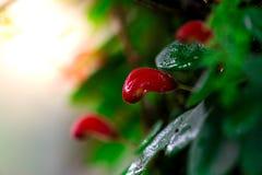 Листья красные и зеленая предпосылка мха, дерево с зеленым мхом вебсайт обоев пользы tan 2 теней представления приглашения иллюст Стоковое Изображение