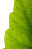 листья края Стоковое фото RF