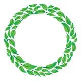 листья круга Стоковые Изображения