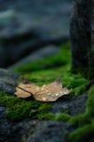 листья крупного плана осени Стоковые Изображения RF
