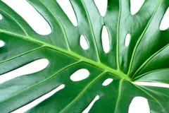 листья крупного плана Стоковое Изображение RF