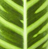 листья крупного плана Стоковые Фотографии RF