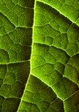 листья крупного плана стоковое фото rf