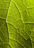 листья крупного плана Стоковые Фото
