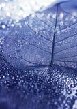 листья крупного плана Стоковое Фото