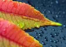 листья крупного плана Стоковое Изображение