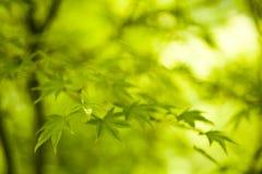 листья крупного плана Стоковые Изображения RF