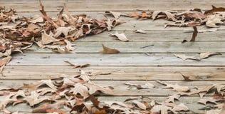 Листья крылечку Стоковое фото RF