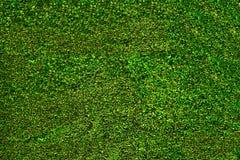Листья куста зеленой травы Стоковые Изображения