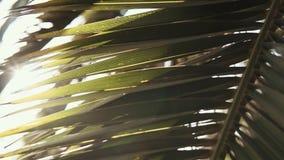 Листья ладони под солнцем акции видеоматериалы