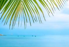Листья ладони против моря стоковое изображение rf