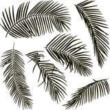 Листья ладони drawm руки на белой предпосылке Стоковое Фото