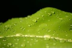 Листья листва падения Стоковое Изображение