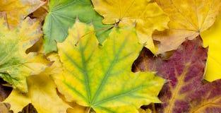 листья листьев рамки абстрактной предпосылки осени цветастые Стоковые Фото