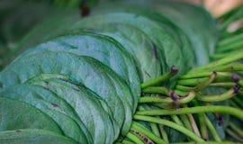 Листья лотка бетэла штабелированные для продажи в рынке в Индии стоковая фотография rf
