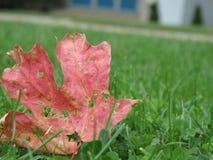 листья лужайки травы осени стоковое изображение rf