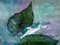 листья льда подняли вниз Стоковые Изображения