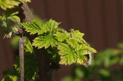 Листья макроса Стоковое Фото