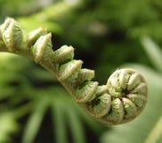 листья младенца Стоковое Изображение
