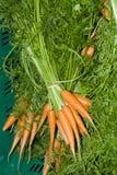 листья моркови стоковые фотографии rf