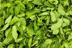 Листья мяты стоковое изображение