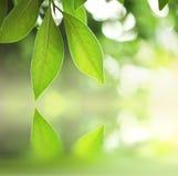 листья над водой стоковое фото rf