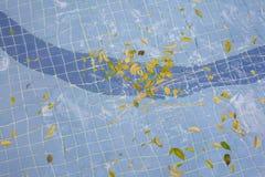 Листья на бассейне Стоковое Изображение