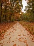 Листья на бетоне Стоковая Фотография RF