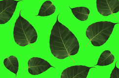 Листья на белой предпосылке Стоковое Фото