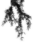Листья на белой предпосылке Стоковое Изображение