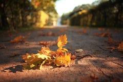 Листья на ветви осени Стоковое Изображение