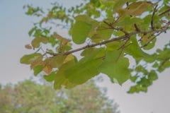 Листья на ветви Стоковая Фотография
