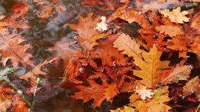 Листья на воде сток-видео