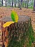 Листья на выхвате Стоковое Фото