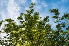 Листья на голубом небе Стоковые Фото