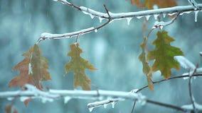 Листья на дереве в зиме как рождество tree2 акции видеоматериалы