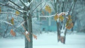 Листья на дереве в зиме как рождество tree3 сток-видео