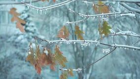 Листья на дереве в зиме как рождество tree1 сток-видео