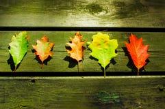 Листья на деревянном столе Стоковая Фотография RF