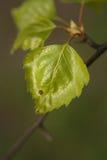 Листья на дереве Стоковое Изображение RF