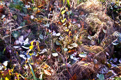Листья на заморозке сухой травы Стоковое фото RF