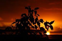 Листья на заходе солнца Стоковое Изображение RF