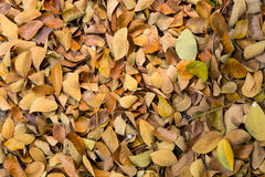 Листья на земле Стоковое Изображение RF