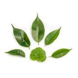 Листья на листе бумаги Стоковое Изображение RF