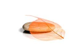 Листья на камне Стоковое фото RF
